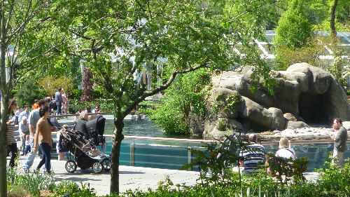 central park zoo  Guide To NYCs Summer Streets