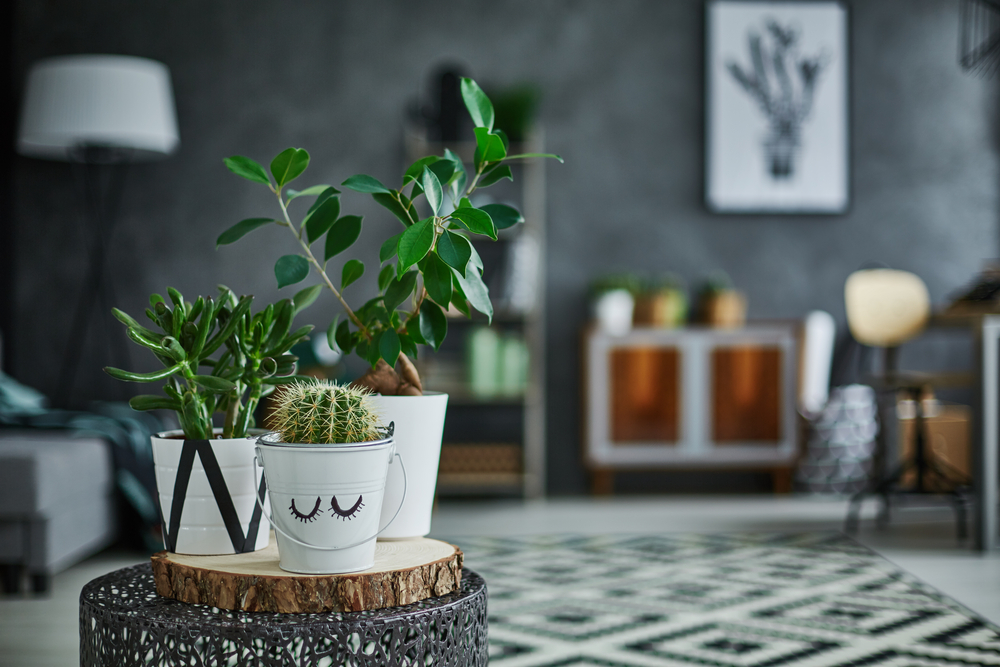 Bring plants into your apartment