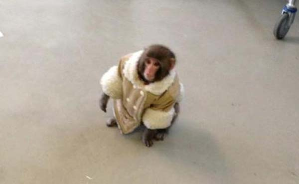 Ikea Monkey is a 2012 Fashion Highlight